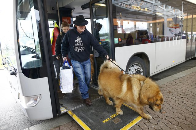 A man arrives with a Tibetan Mastiff for the first day of the Crufts Dog Show in Birmingham, Britain March 10, 2016. (Photo by Darren Staples/Reuters)