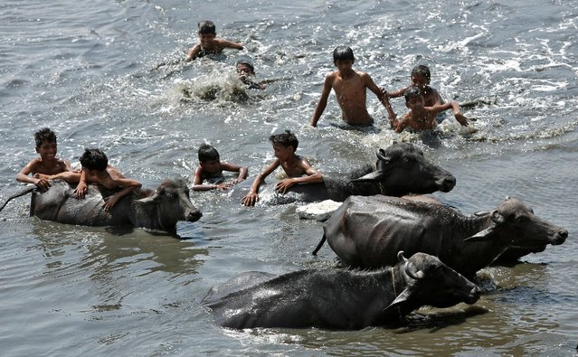 Boys play with buffaloes in a pond on a hot day in New Delhi, India April 14, 2016. (Photo by Anindito Mukherjee/Reuters)