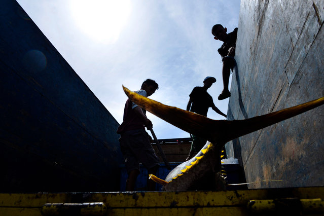 Workers load yellowfin tuna into a truck at a fishing port in Banda Aceh, Indonesia on July 31, 2019. (Photo by Chaideer Mahyuddin/AFP Photo)