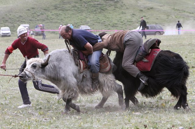 Participants wrestle while riding yaks during Kyrgyz national horse games and festival near the Tulpar-Kul in the Chon Alai range, some 3500 metres (11483 feet) above sea level, Osh region, Kyrgyzstan, July 25, 2015. (Photo by Vladimir Pirogov/Reuters)