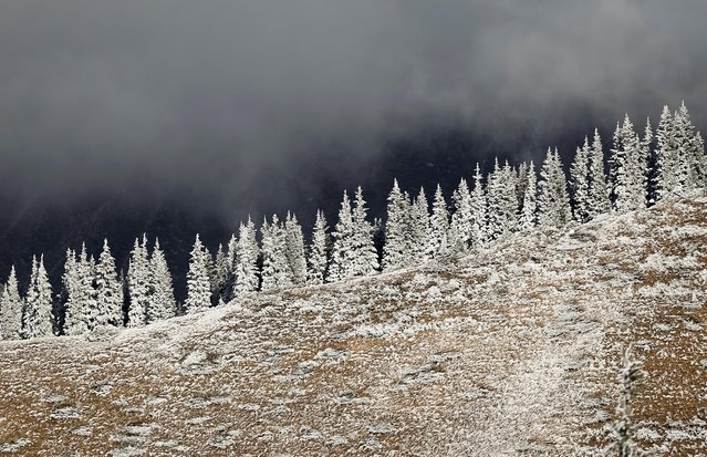Hoar-frost covered trees are seen in a mountain outside Almaty, Kazakhstan on November 6, 2019. (Photo by Pavel Mikheyev/Reuters)