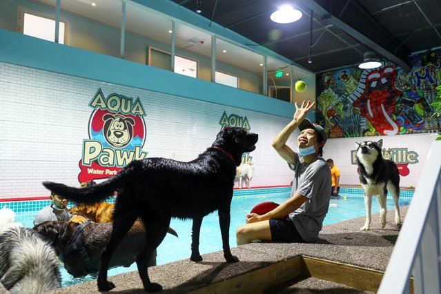 """A dog-sitter plays with a dog at """"Aqua Pawk"""", the first, newly-opened water park for dogs, after easing of the coronavirus disease (COVID-19) restrictions in Dubai, United Arab Emirates on July 23, 2020. (Photo by Ahmed Jadallah/Reuters)"""