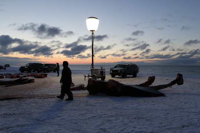 In this October 7, 2014, photo, a light running on a generator illuminates a man as he passes the giant bones of a bowhead whale in a field near Barrow, Alaska. Whale bones are coveted by many in Barrow, often used to adorn the grave sites of loved ones. (Photo by Gregory Bull/AP Photo)