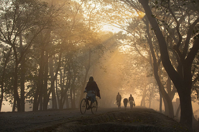 A man rides a bicycle on a foggy cold morning on the outskirts of Gauhati, India, Friday, January 17, 2020. (Photo by Anupam Nath/AP Photo)