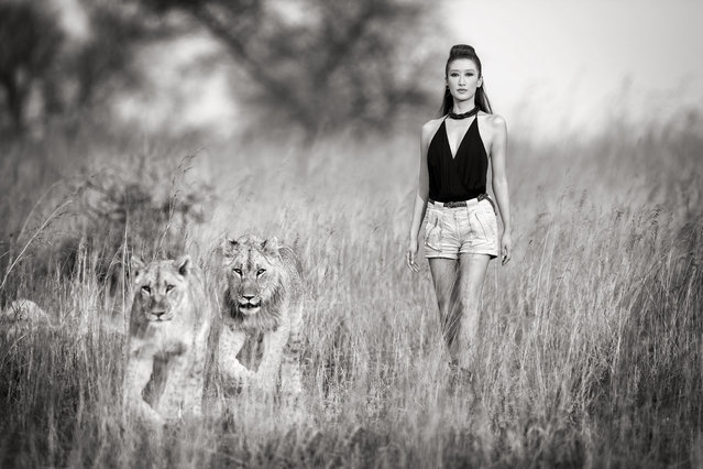 Jennifer Tse with lionesses at the Wild is Life Conservancy in Zimbabwe. (Photo by Sean Lee-Davies/Caters News)
