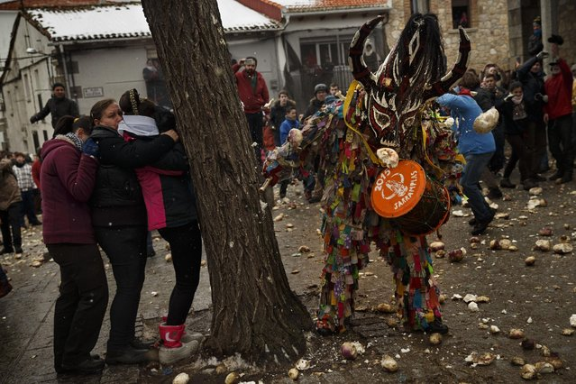 People hide behind a tree while others throw turnips at the Jarramplas as he makes his way through the streets beating his drum during the Jarramplas Festival in Piornal, Spain, Tuesday, January 20, 2015. (Photo by Daniel Ochoa de Olza/AP Photo)