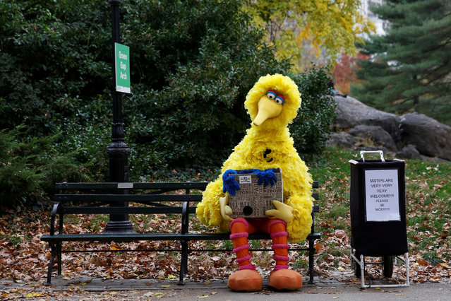 A man dressed as the Sesame Street character Big Bird sits on a bench waiting to take pictures with people walking through Central Park  in New York U.S., November 14, 2016. (Photo by Shannon Stapleton/Reuters)