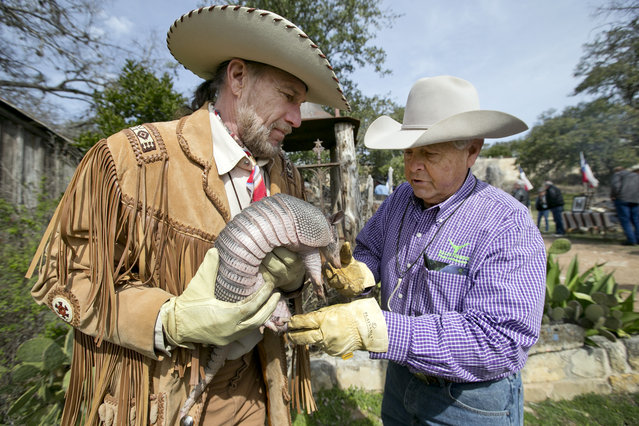 Tex Chamness holds Bee Cave Bob while Ralph Fisher, right, cleans off his snout at the West Pole in Bee Cave, Texas, Monday, February 2, 2015. Every Groundhog Day at the West Pole Bee Cave Bob, an armadillo, predicts the Texas weather and political climate by exiting his borough at the end of a concrete slab painted like a highway. This year Bee Cave Bob predicted an early spring. (Photo by Deborah Cannon/AP Photo/Austin American-Statesman)