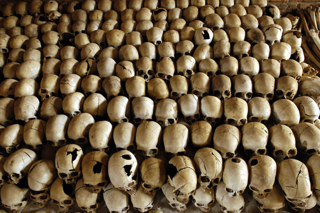 A file photo taken on February 27, 2004 shows skulls of victims of the Ntarama massacre during the 1994 genocide, lined in the Genocide Memorial Site church of Ntarama, in Nyamata. Among the 59.000 Tutsis who lived in the province, 50.000 were killed during the genocide, and among them 10.000 were slain in the church. The landmark trial of a former Rwandan army captain charged with complicity in the 1994 genocide kicked off in Paris on February 4, 2014, the first of its kind in France. (Photo by Gianluigi Guercia/AFP Photo)