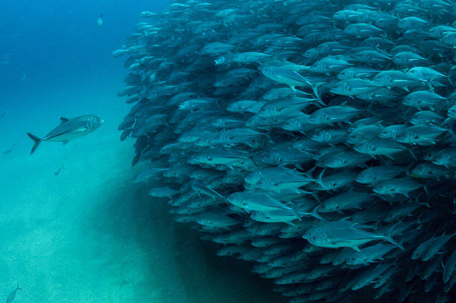 This is the hilarious moment a marine photographer managed to capture hundreds of wide-eyed fish apparently posing for a picture