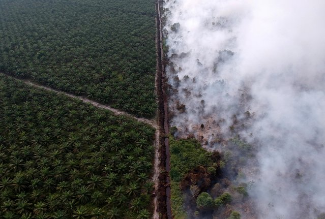 An aerial view of forest fire next to oil palm plantation at Kumpeh Ulu district in Muarojambi, Indonesia on July 30, 2019. (Photo by Wahdi Septiawan/Antara Foto via Reuters)