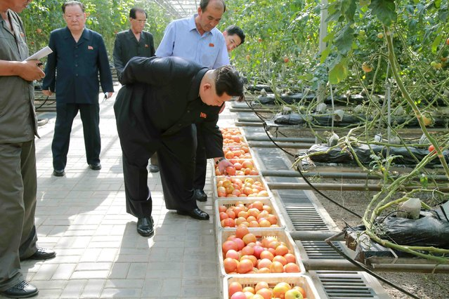 North Korean leader Kim Jong Un gives field guidance to the Pyongyang Vegetable Science Institute in this undated picture released by North Korea's Korean Central News Agency (KCNA) on July 7, 2015. (Photo by Reuters/KCNA)