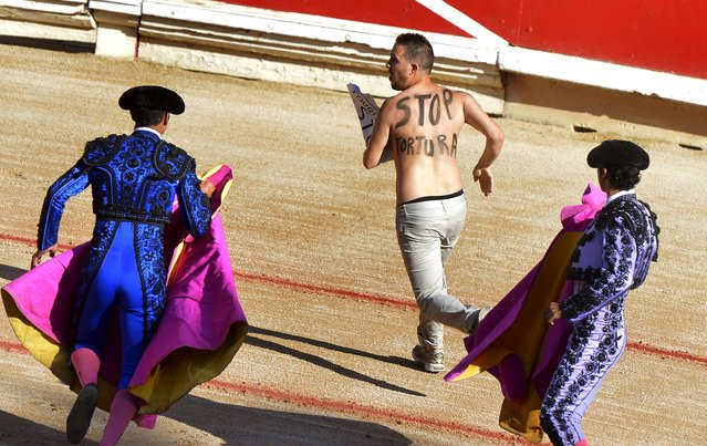 A anti bullfighting protester with Stop Torture written on his back is chased by assistants during a bullfight by Spanish matador Juan Jose Padilla at the San Fermin festival in Pamplona July 13, 2015. (Photo by Vincent West/Reuters)