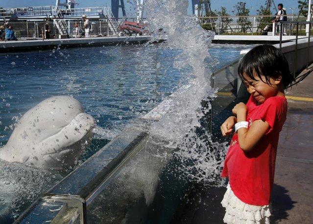 A girl reacts to water splash made by by a beluga whale at the Hakkeijima Sea Paradise aquarium-amusement park complex in Yokohama, southwest of Tokyo, Tuesday, July 21, 2015. Temperatures in Tokyo's metropolitan area neared around 96 degree Fahrenheit, or 35 degree Celsius, on Tuesday. (Photo by Shuji Kajiyama/AP Photo)