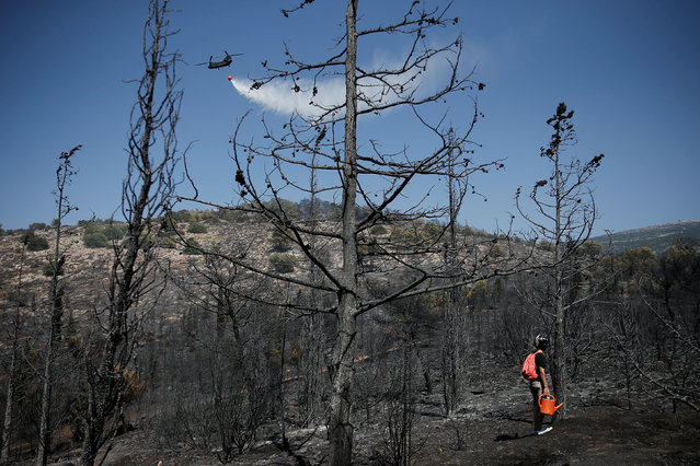 A Chinook helicopter makes a water drop during a wildfire as a local holding a watering can stands among burned trees in Athens, Greece, August 10, 2017. (Photo by Alkis Konstantinidis/Reuters)