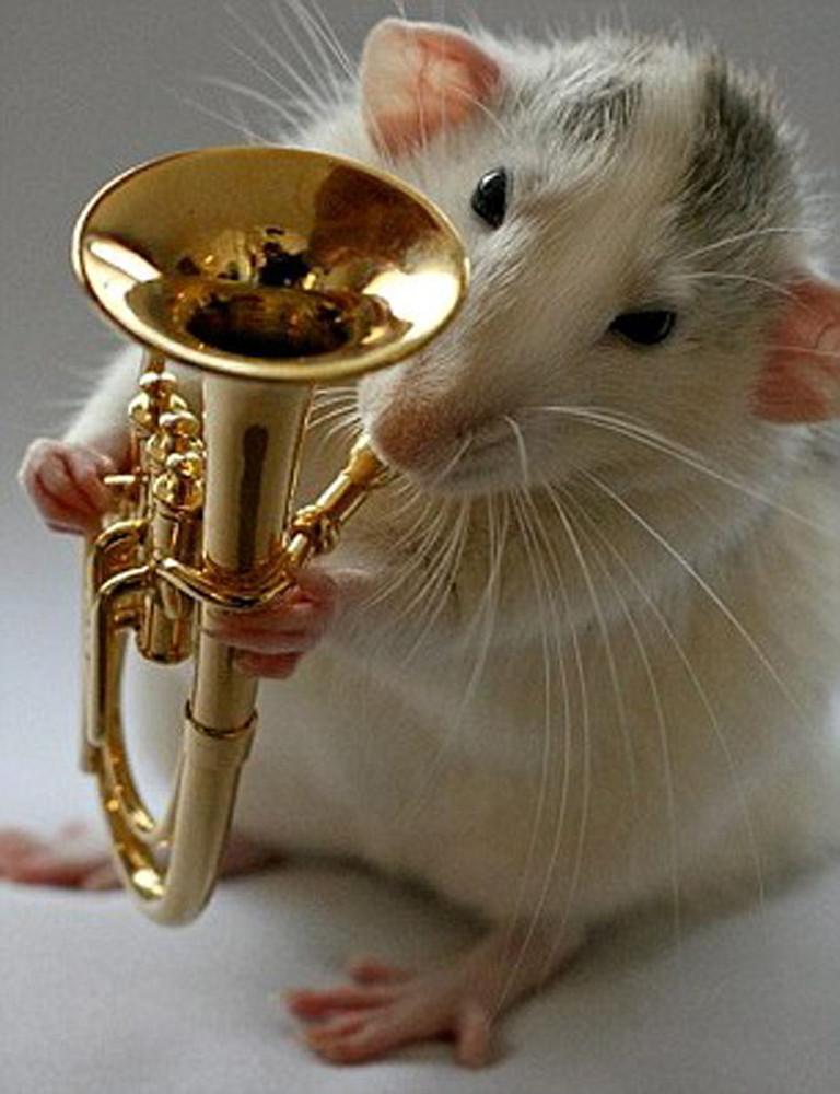Rats by Ellen van Deelen