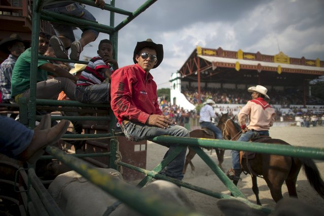 Cowboy Arturo Padilla, 25, (C), who has a degree in gastronomy, takes part in a rodeo competition at the International Livestock Fair Show in Havana, March 22, 2015. (Photo by Alexandre Meneghini/Reuters)