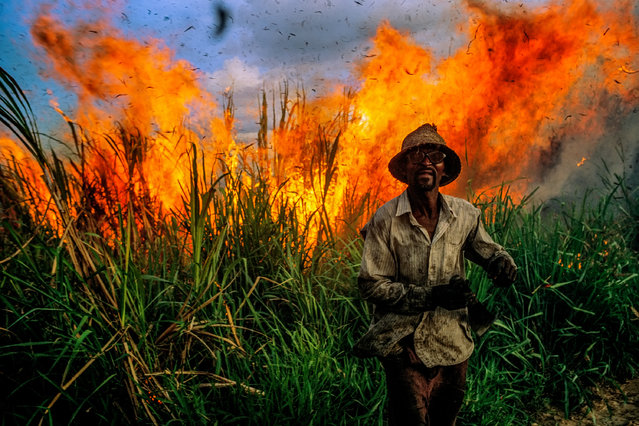 """Bahia, sugar cane plantation. """"I spent several days with the hard-working cane cutters. Setting fire to the cane to make it easier to cut later is a standard practice. As usual, I waded right in to see up close this burning of the cane. Everything was fine until suddenly the wind shifted, sending the flames right in our direction. The workers started to run for their lives. I had to make a fast decision: run or shoot. I did both. Finally the heat was overwhelming. My metal Leica was burning my hands. Yet I knew I had to get this picture"""". (Photo by David Alan Harvey/The Guardian)"""