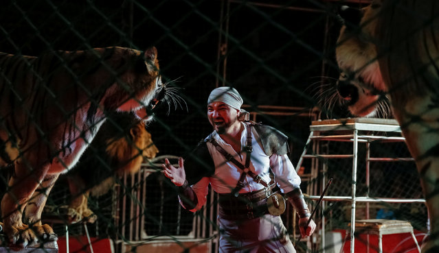 """Tigers, a lion and their trainer perform during the presentation of the new show """"The extreme arena"""" at the National Circus in Kiev, Ukraine, September 15, 2016. (Photo by Gleb Garanich/Reuters)"""