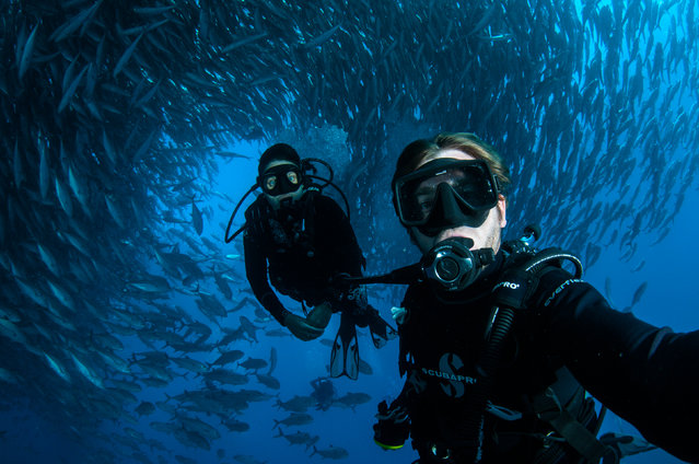 It looks like an underwater tornado, but a diver was actually stuck in the middle of a huge school of fish. The fish swarmed around Mika Woyda in their thousands as she swam off the coast of Cabo Pulmo, Mexico. Before entering the water the couple, who live in Boulder, Colorado, had some shots in mind but never imagined what they would capture. Here: photographer Caine Delacy with his wife Mika Woyda. (Photo by Caine Delacy/Mika Woyda/Caters News)