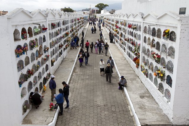 People walk among graves at a cemetery known for its topiary art, during the observance of the Day of the Dead, in Tulcan, Ecuador November 2, 2015. (Photo by Guillermo Granja/Reuters)