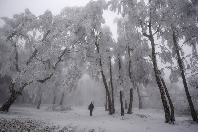 A man walks under trees covered with hoar-frost on Galyateto Mountain, Hungary, Tuesday, December 22, 2020. (Photo by Peter Komka/MTI via AP Photo)