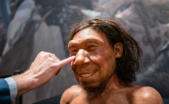 A reconstruction of the first Neanderthal in the Netherlands, nicknamed Krijn, is on display in the National Museum of Antiquities in Leiden, The Netherlands, 06 September 2021. Krijn's face has been worked on for years by the brothers Adrie and Alfons Kennis. (Photo by Bart Maat/EPA/EFE)