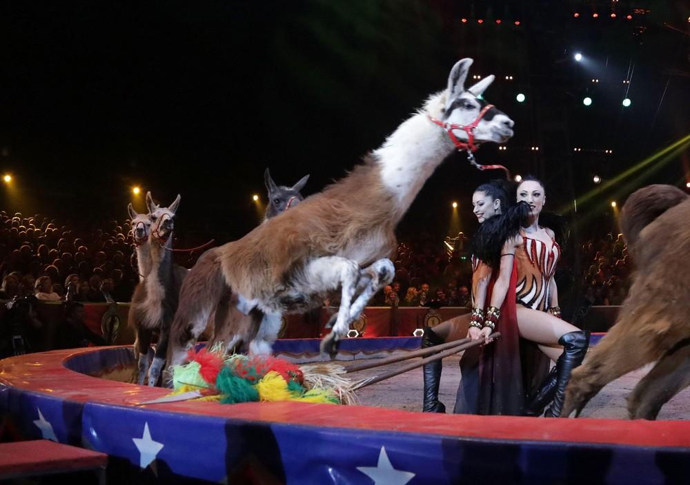Circus this Week