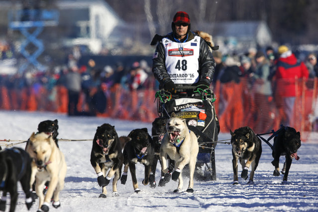 Four-time champion Martin Buser and team leave the start chute at the restart of the Iditarod Trail Sled Dog Race in Willow, Alaska March 6, 2016. (Photo by Nathaniel Wilder/Reuters)