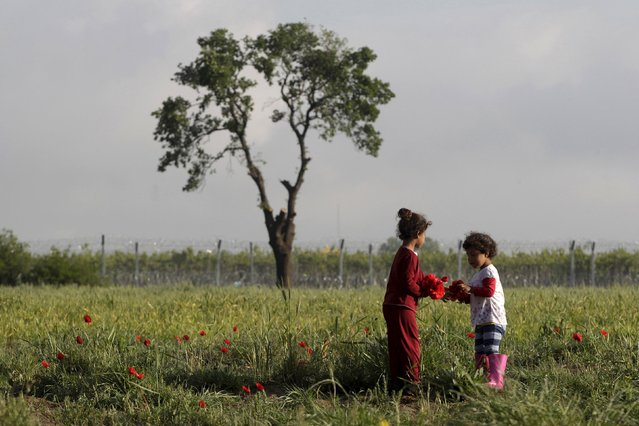 Two children gather poppies at a field next to a makeshift camp for migrants and refugees at the Greek-Macedonian border near the village of Idomeni, Greece, April 24, 2016. (Photo by Alexandros Avramidis/Reuters)