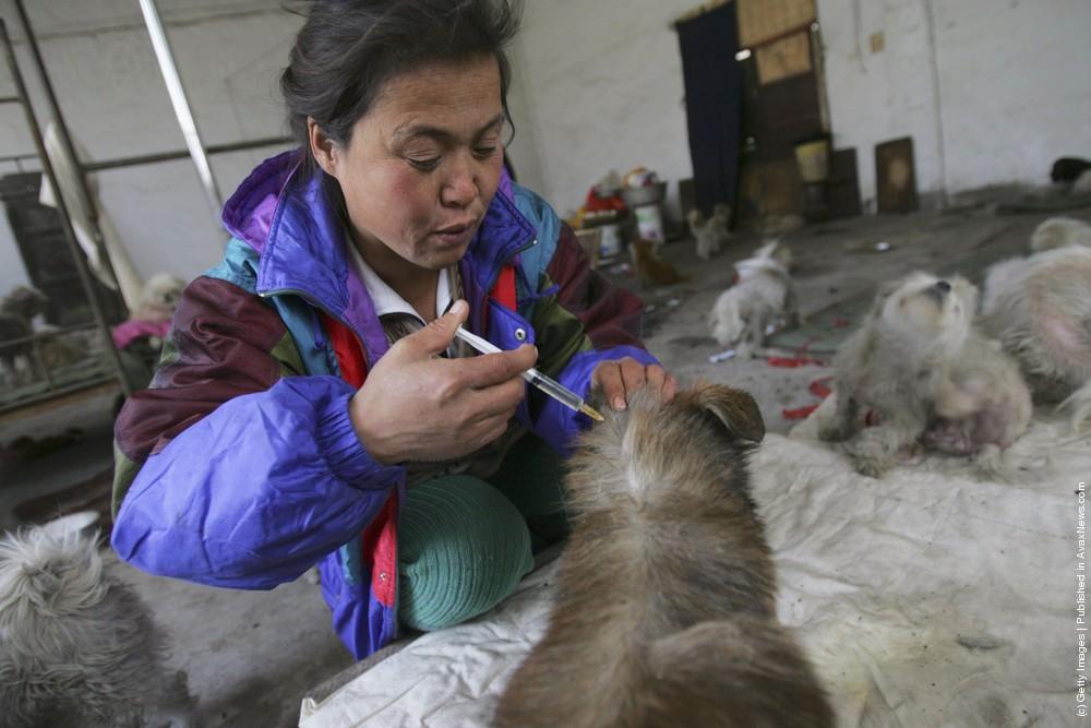 Animal Lover Dai Shuqing