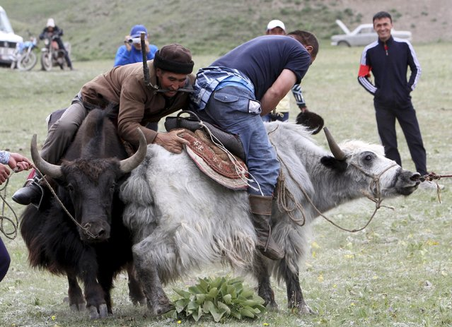 Participants wrestle while riding yaks during the Kyrgyz national horse games and festival near the Tulpar-Kul lake in the Chon Alai mountain range, some 3500 metres (11483 feet) above sea level, in the Osh region of Kyrgyzstan, July 25, 2015. (Photo by Vladimir Pirogov/Reuters)
