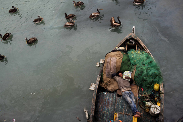 A fisherman takes a nap on his boat after deep sea fishing all night in El Callao, Peru, November 3, 2012.  Small scale fishermen in this area work 24 hour shifts, catching mostly anchovy, mackerel and silverside. (Photo by Rodrigo Abd/AP Photo)