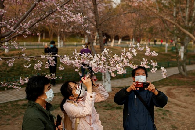 People wearing protective masks take pictures of cherry blossoms at a park, as the country is hit by an outbreak of the novel coronavirus disease (COVID-19), in Beijing, China on March 23, 2020. (Photo by Thomas Peter/Reuters)