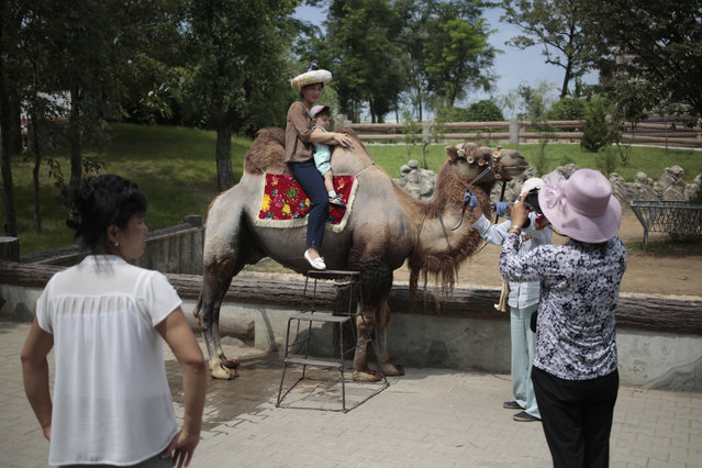 A North Korean and her son pose for a photo on the back of a camel at the newly opened Central Zoo in Pyongyang, North Korea, Tuesday, August 23, 2016. (Photo by Dita Alangkara/AP Photo)