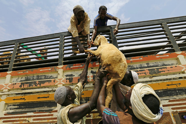 People unload sheep from a truck during preparations ahead of the Eid al-Adha festival in Khartoum September 11, 2016. (Photo by Mohamed Nureldin Abdallah/Reuters)