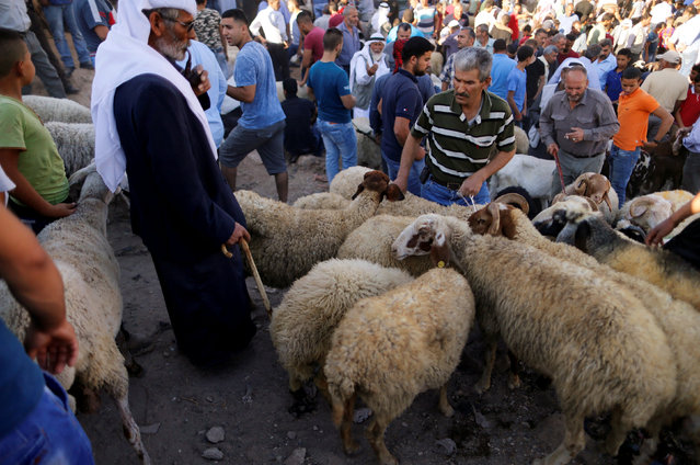 Palestinians stand next to sheep at a livestock market, ahead of the Eid al-Adha festival, in the West Bank town of Bethlehem September 10, 2016. (Photo by Ammar Awad/Reuters)