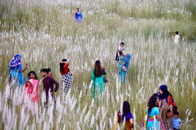 People visit a catkin field amid the COVID-19 pandemic in Sarighat, on the outskirts of Dhaka, Bangladesh, October 2, 2020. (Photo by Mohammad Ponir Hossain/Reuters)