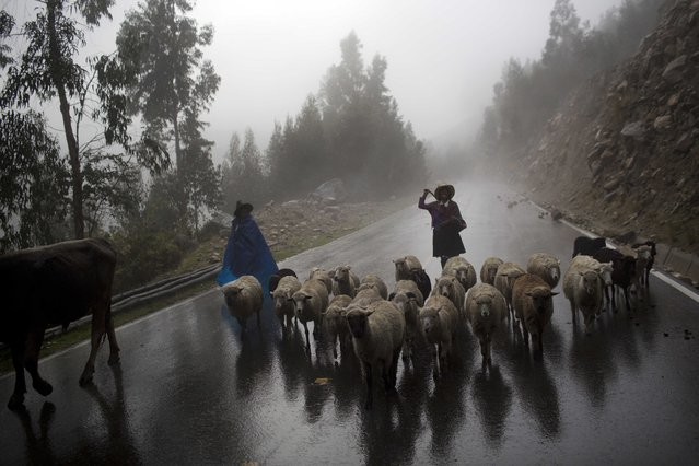 Women herd their sheep to their village in Huaraz, Peru, Wednesday, December 3, 2014. Peru's glaciers have lost more one-fifth of their mass in just three decades, and the 70 percent Peru's 30 million people who inhabit the country's Pacific coastal desert, depend on glacial runoff for hydropower and to irrigate crops, meaning their electricity and long-term food security could also be in peril. Higher alpine temperatures are killing off plant and animal species in cloud forests and scientists predict Pacific fisheries will suffer. (Photo by Rodrigo Abd/AP Photo)