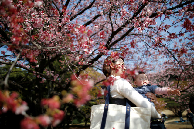 A seven-month-old baby and her mother look at early flowering Kanzakura cherry blossoms in full bloom at the Shinjuku Gyoen National Garden in Tokyo, Japan March 14, 2018. (Photo by Issei Kato/Reuters)
