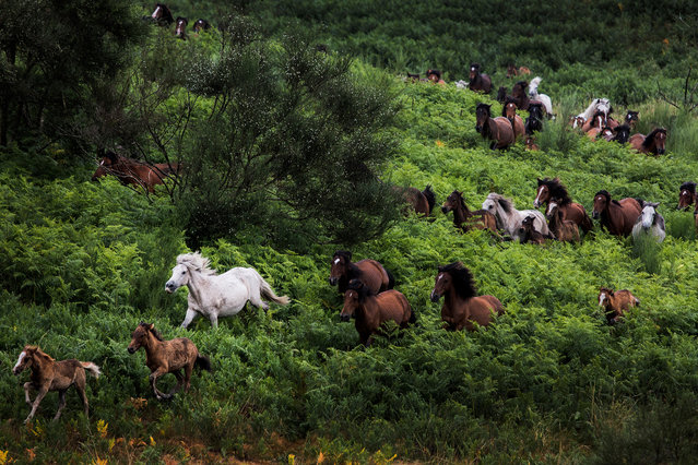 Zoom Out on Nature, winner. Horses in Galicia by Javier Arcenillas, taken in Galicia, Spain. (Photo by Javier Arcenillas/REDISCOVER Nature/EEA)
