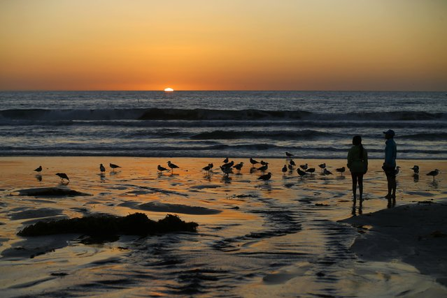 Kids look at seabirds as the sun sets from Moon Light Beach in Encinitas, California October 28, 2014. (Photo by Mike Blake/Reuters)