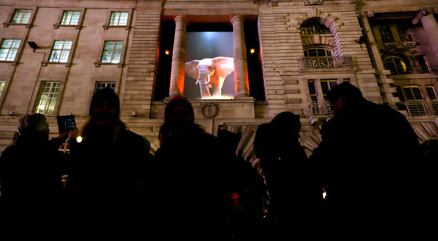 People gather to watch an installation by artist Top la Design/Catherine Garret called 'Elephantastic' on a building near Piccadilly in London, Thursday, January 14, 2016. Lumiere London is a festival of lights across 30 London locations, showing installations, projections and interactive pieces, the festival runs until January 17 and is expected to attract thousands of visitors. (Photo by Kirsty Wigglesworth/AP Photo)