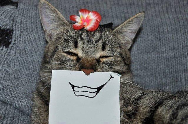 Funny Hand-Drawn Cat Facial Expressions