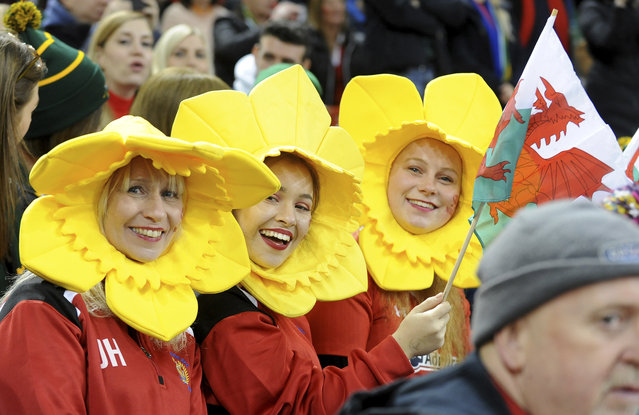 Welsh fans wait for the start of the rugby union international match between Wales and South Africa at the Principality Stadium in Cardiff, Wales, Saturday, November 24, 2018. (Photo by Rui Vieira/AP Photo)