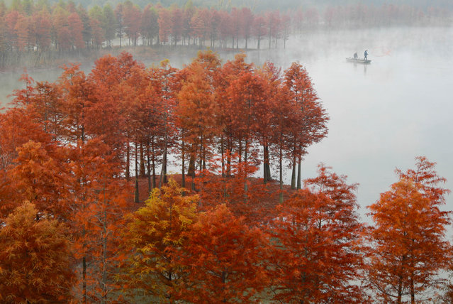 Fishermen cast their nets at Lake Tianquan in  on November 13, 2018Huai'an, China, in the middle of a redwood forest. (Photo by Zhou Haijun/Xinhua News Agencya/Barcroft Images)
