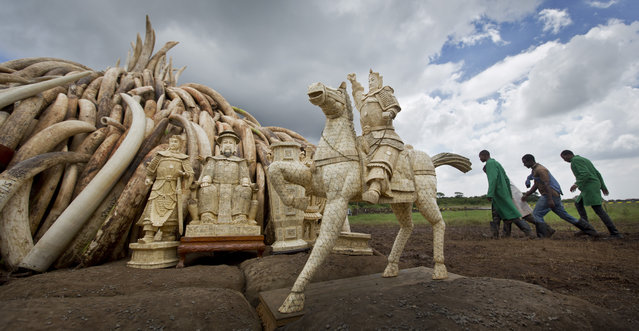 Workers walk past as ivory statues stand in front of one of around a dozen pyres of ivory, in Nairobi National Park, Kenya Thursday, April 28, 2016. (Photo by Ben Curtis/AP Photo)