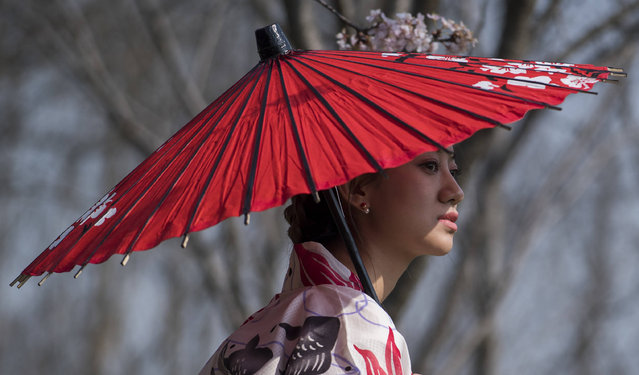 A girl, dressed up in a traditional dress, poses for photography enthusiasts next to a cherry blossom tree in the Gucun Park in Shanghai March 4, 2017.  Every year the cherry blossoms in this park attract hundreds of thousands of visitors. The official Cherry Blossom Festival in the Gucun park starts end of March. (Photo by Johannes Eisele/AFP Photo)