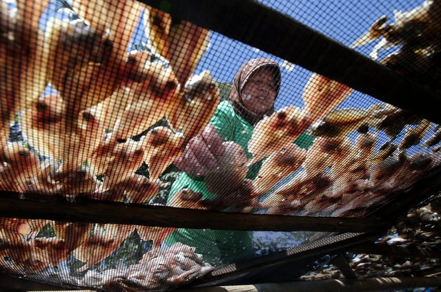 Indonesian woman dries salt fish in Tanggerang, Banten, Indonesia, 06 May 2016. (Photo by Bagus Indahono/EPA)