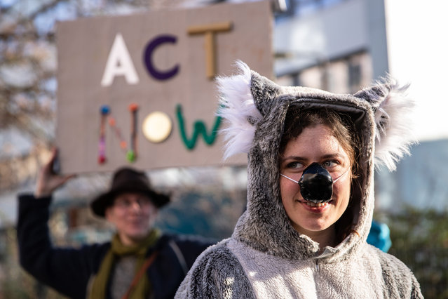 """A protester dressed as a koala bear during an Environmental activists of the Extinction Rebellion movement demonstrate in front of the Australian embassy in Berlin, Germany, 10 January 2020. The """"XR"""" activists hold the Australian government and its environmental policy, responsible to the massive Bushfires ravaging across the Australian continent since September 2019. (Photo by Omer Messinger/EPA/EFE)"""